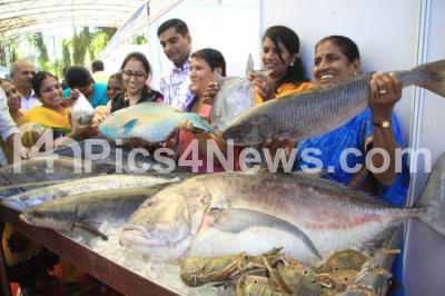Mathsya mela in bangalore dating